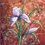 Single Iris in Bloom #2