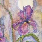 Iris in Twilight